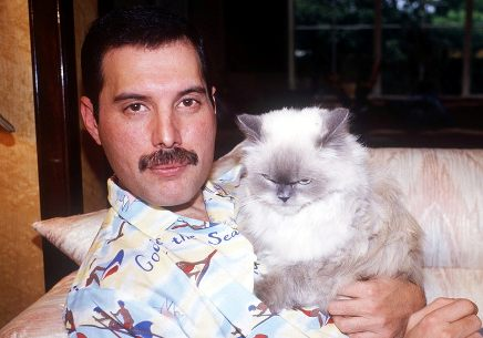 The Names Of Freddie Mercurys Cats Nancys Baby Names