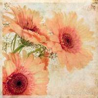 Nancy Abel  Fine Art Photography & Digital Expression