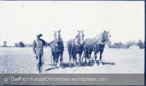 Clarence Duck horse team Canada