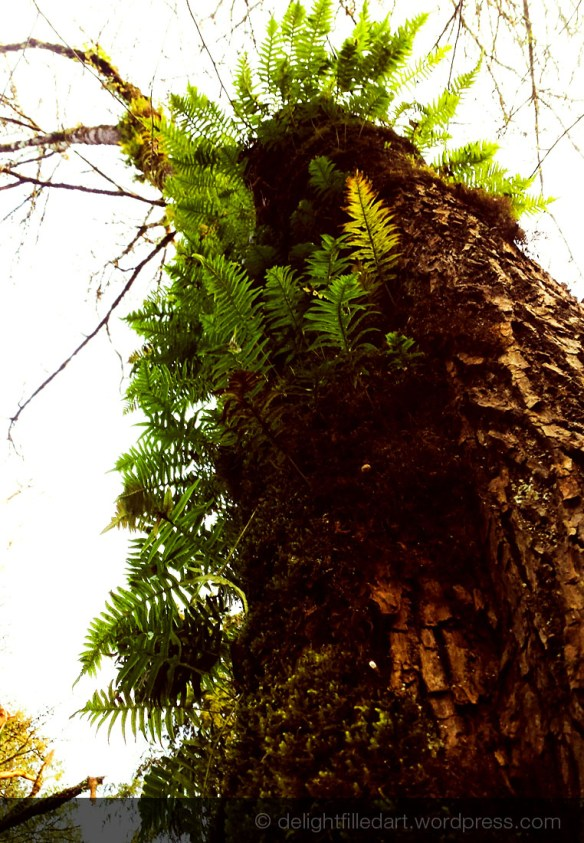mossy fern covered tree