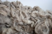 Stunning Polwarth raw New Zealand wool fleece