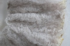raw-fleece-NewZealand-Polwarth-8834