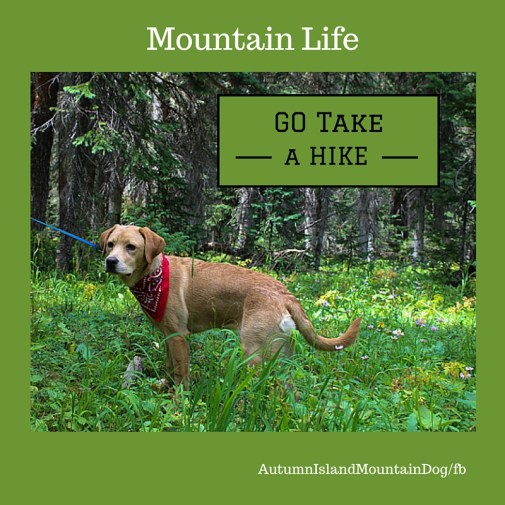 autumn-islandmountaindog_fb
