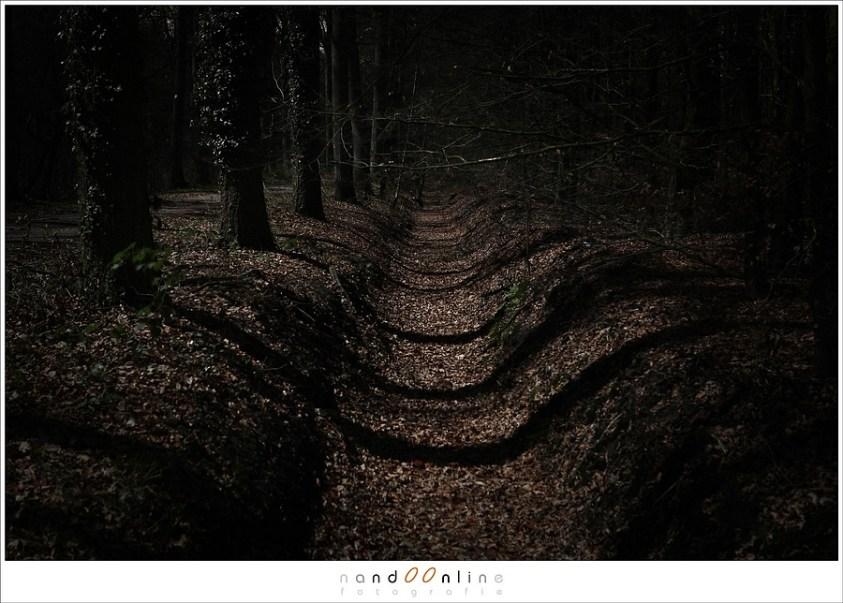 Maanlicht in het donkere bos geeft schaduwen