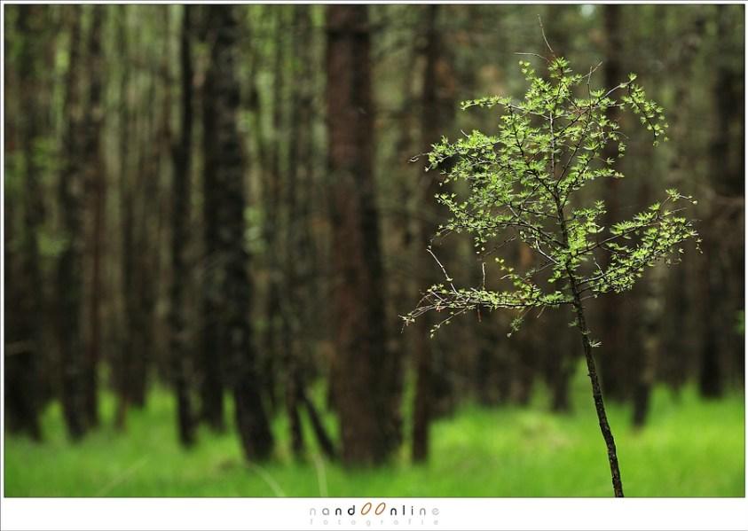 Over compositie en licht in het bos