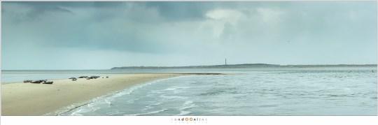 Een panorama van het robbeneiland met op de achtergrond het waddeneiland Ameland