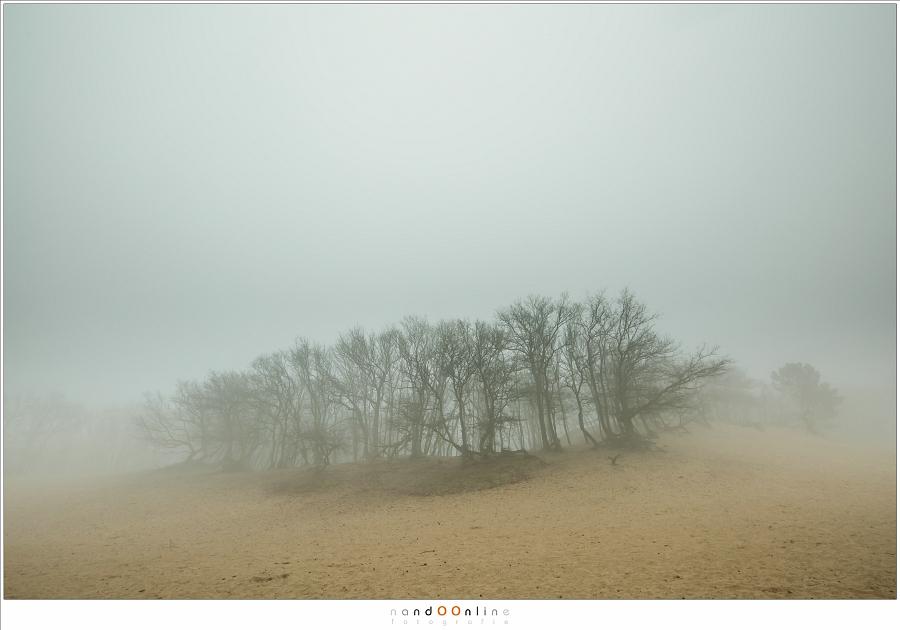 Een eiland van bomen in de mist.