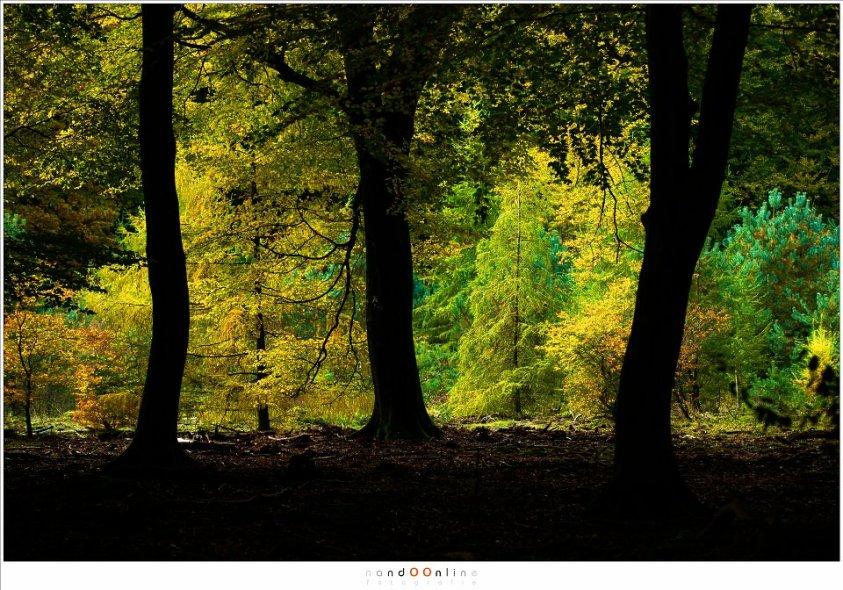 Herfstkleuren worden het beste zichtbaar als het vanuit de duisternis van het bos gezien wordt. (ISO400, f/4,5, -2EV, 1/400 115mm brandpunt)
