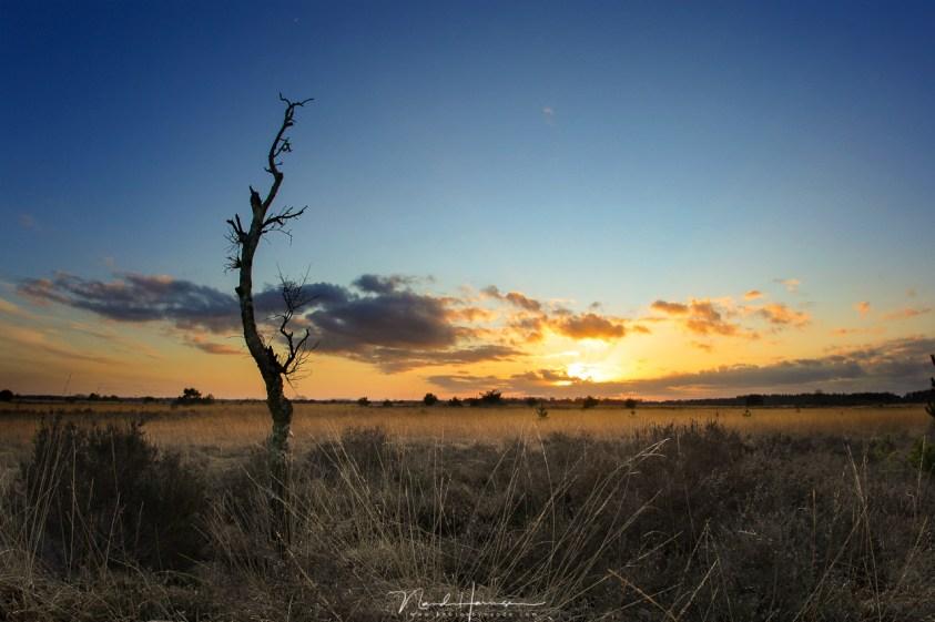 creatief gebruik van brandpunt in je fotografie