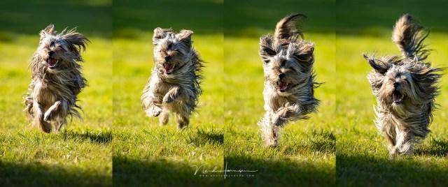 Honden fotograferen met de EOS 1Dx mk3, Sem in actie