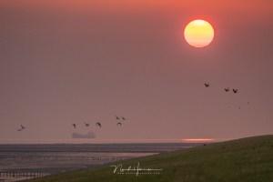Zon, vogels en een boot tijdens een ochtend bij het Groninger wad