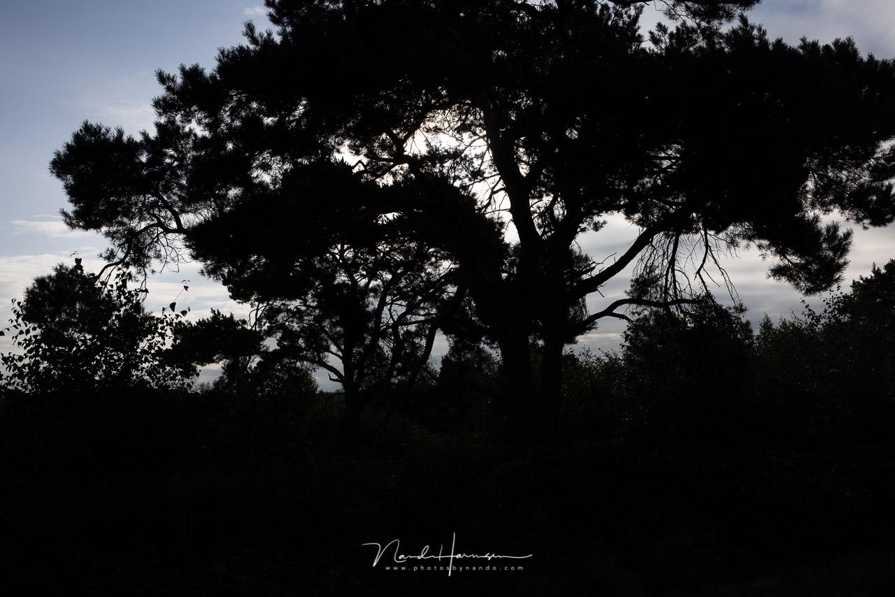 foto zonder bewerking uit de Canon EOS R5