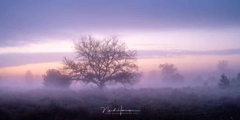 Het blauwe uurtje op de Strabrechtse Heide