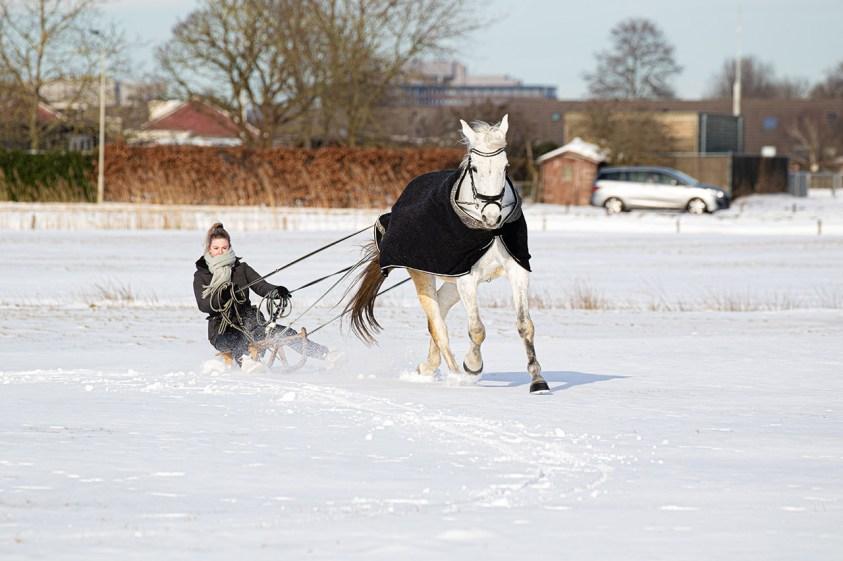 Anne Ponsen (Djamilla met het paard Boy)