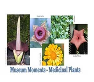 Museum moments medicinal plants