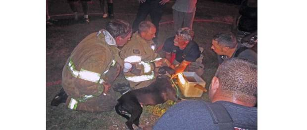New Albany MS Firefighters tend heroic family dog at Barksdale fire