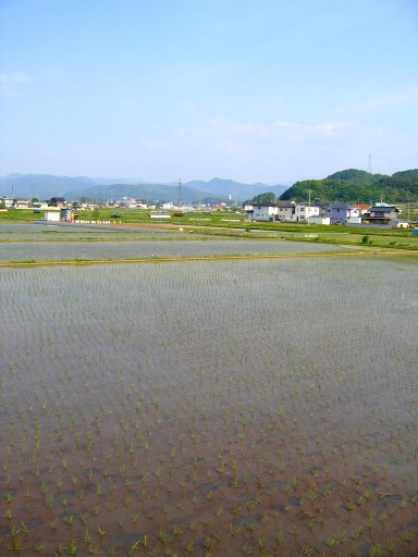 The expanse of rice fields in Nagano prefecture.