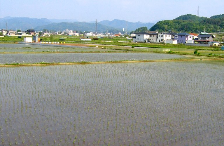 Rice fields in Nagano - freshly planted