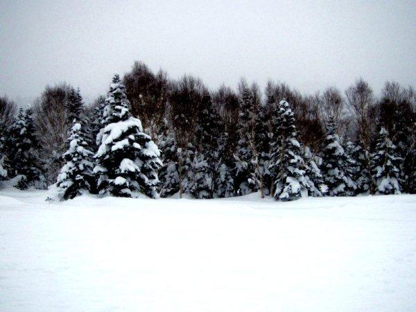 Trees n Snow in Shiga