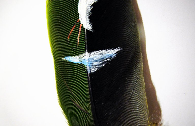 Painted Bird on a Feather
