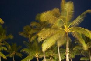 Palms on Guam