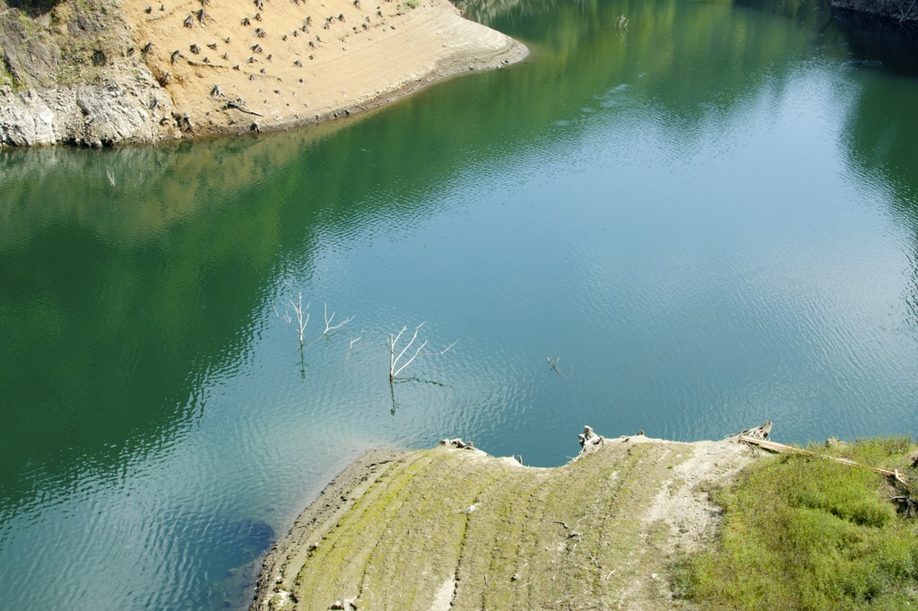 Sunken trees in the reservoir