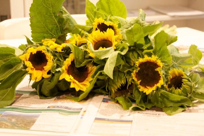 sunflowers, nanny, shecando, sunshine, weekend, rut