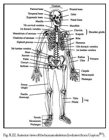 Biology 156: July 2007