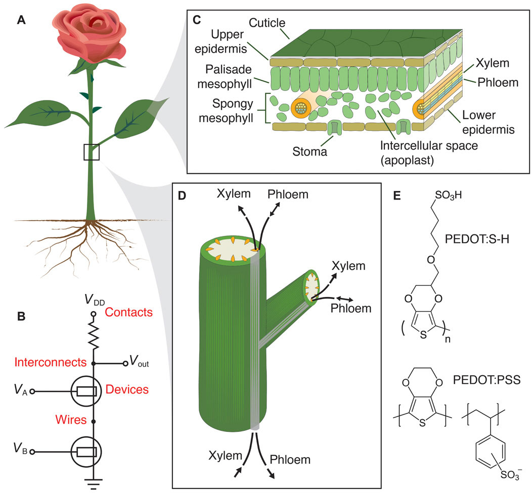 Researchers Create Electronic Plants