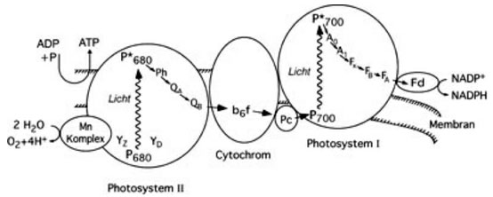 Can artificial photosynthesis solve our energy and climate