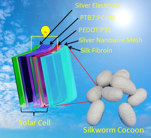 silkworm cocoon picture and the scheme of plastic solar cell with silk fibroin film as substrate