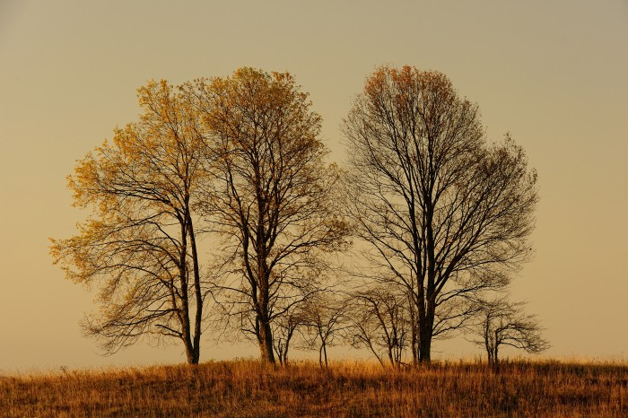 Trees in meadow @ sunrise - Canaan Valley NWR WV (c) Jim Clark