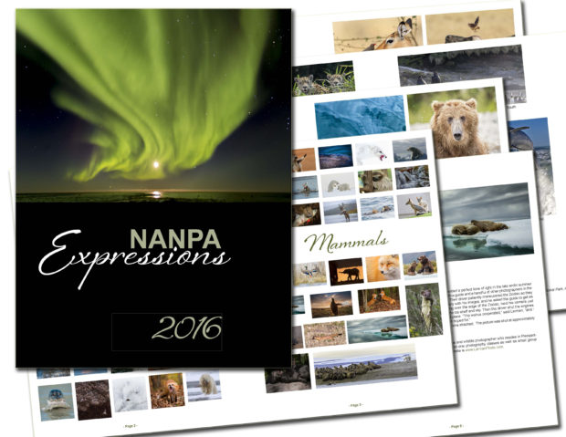 2016ExpressionsCollection