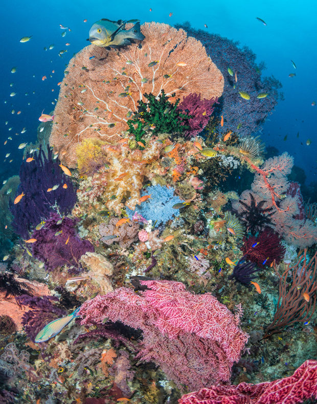 Showcase 2018 Top 100 winner. Massive Lettuce Coral Reef, Forgotten Islands, Indonesia. © Cameron Azad