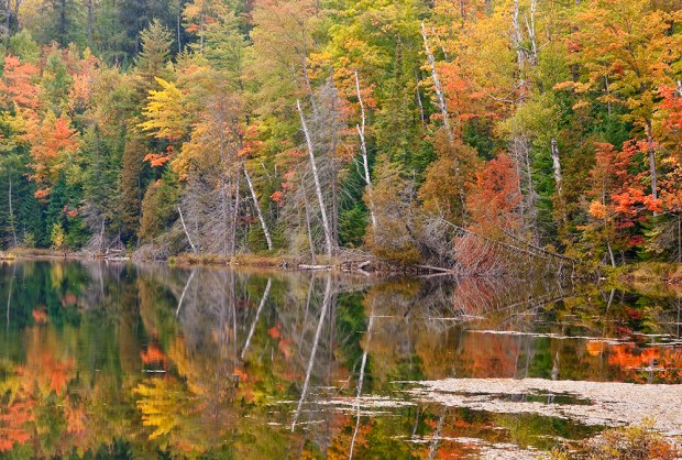 The shores of Red Jack Lake sare ablaze with autumnal color, Hiawatha National Forest, Alger County, Michigan. © Hank Erdmann