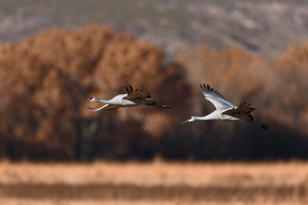 The National Wildlife Refuges were created to manage, conserve and restore fish, wildlife and plants and the ecosystems that sustain them.