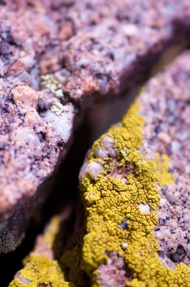 The rocks along the Mesa Trail in Boulder, Colorado are covered in the most incredibly colorful and uniquely shaped lichen.