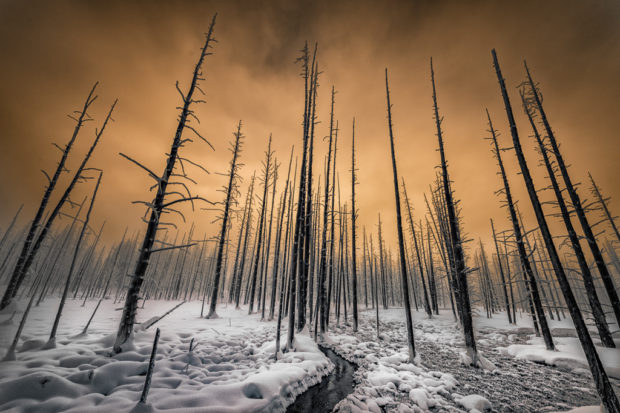Showcase 2019: First Runner-up, Scapes: Bobby Sock Trees in the Winter Cold, Yellowstone National Park, Wyoming, © Barney Koszalka.