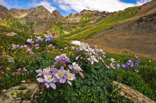 Showcase 2019 Top 100 winner: Colorado Columbine, Colorado © Mike Walker.