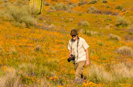 In the wildflower bloom at Peridot Mesa in Arizona © Cathy Illg.