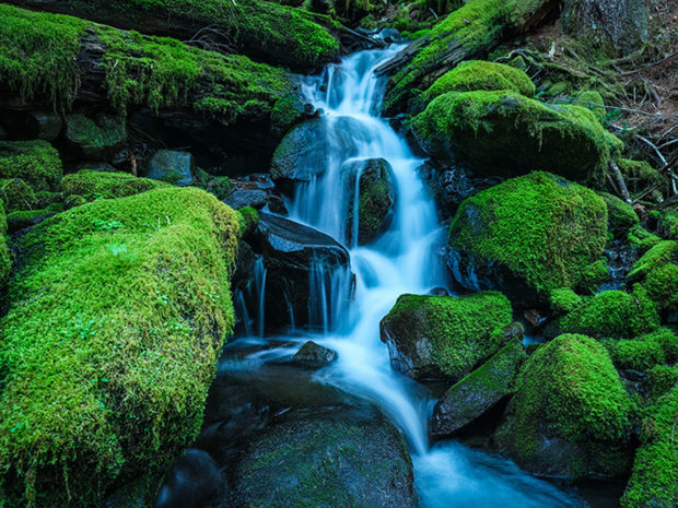 Small waterfall in a creek in Olympic National Park.