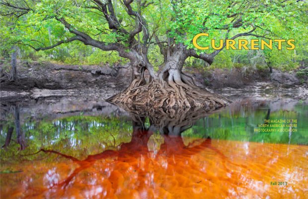 Cover of the Fall 2013 issue of Currents magazine, which was the last published printed issue.      Photo caption:  An Ogeechee tupelo photographed by Carlton Ward Jr. spreads its branches over a shallow sandbar colored orange by tannin-stained water flowing from the Okefenokee Swamp.