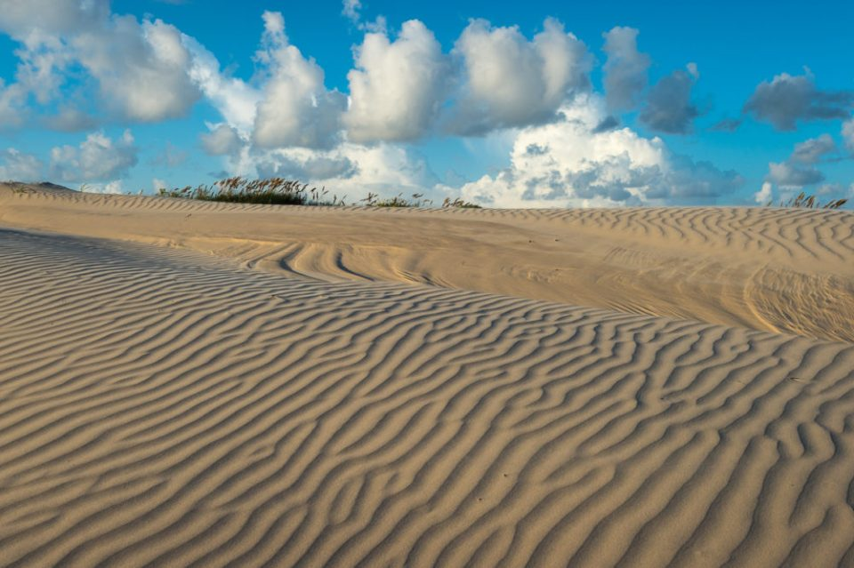 Dune Field, Aeolian Processes, Padre Island National Seashore.