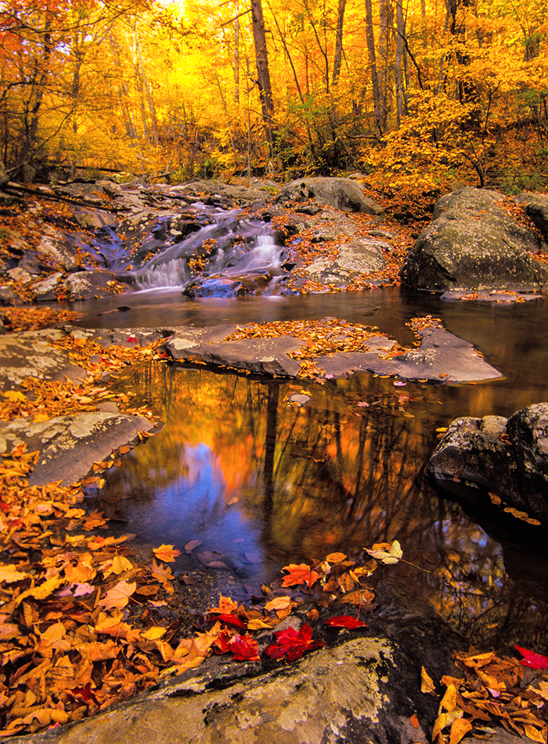 Brilliant autumn hues at Whiteoak Falls highlight a stroll through Shenandoah National Park in October.
