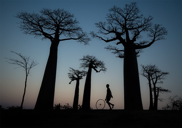 "Showcase 2019 Top 100 winner: ""Malagasy Child Playing the Avenue of the Baobabs,"" Morondava, Madagascar © Victor Nemeth."