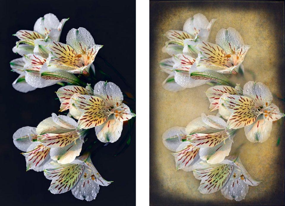 Two versions of Peruvian lilies. The original and one with a textured background