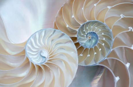 """Showcase 2020 Top 100 winner: """"Parts of a Whole: Two Nautilus Halves, Still Life at Home"""" © Janet MacCausland."""