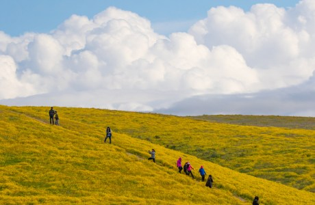 Group of photographers spread out on a flower-covered hillside.