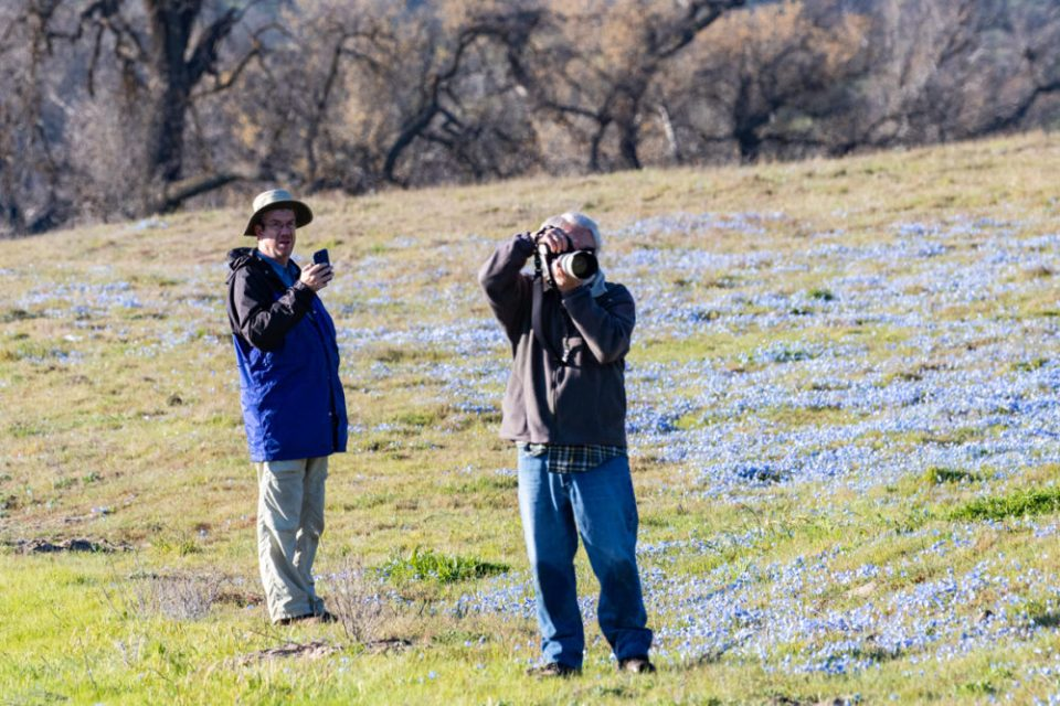Two photographers working their shots in a field of flowers.