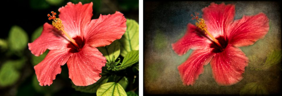 Original hibiscus image  (left) and hibiscus with texture applied (right).